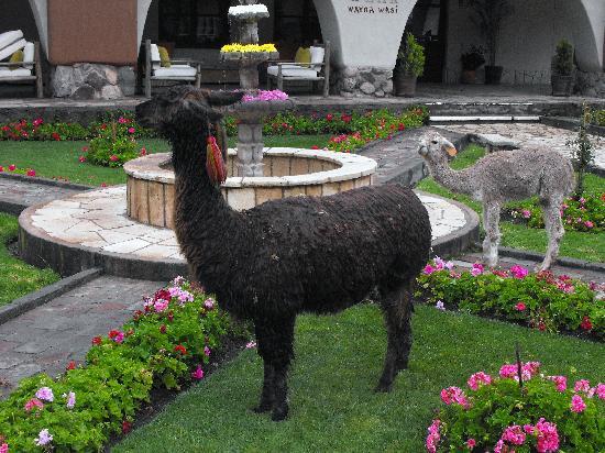 Sonesta Posadas del Inca Yucay: The local lawnmower