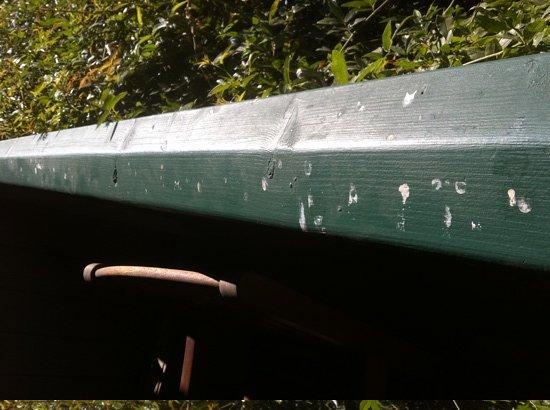 Best Western Sonoma Valley Inn & Krug Event Center: bird droppings