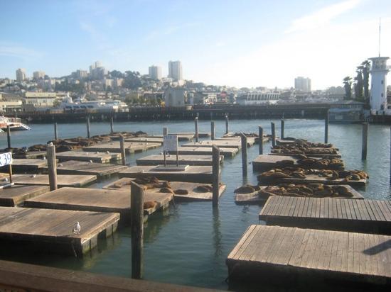 San Francisco Bay: Sealions off Pier 39.