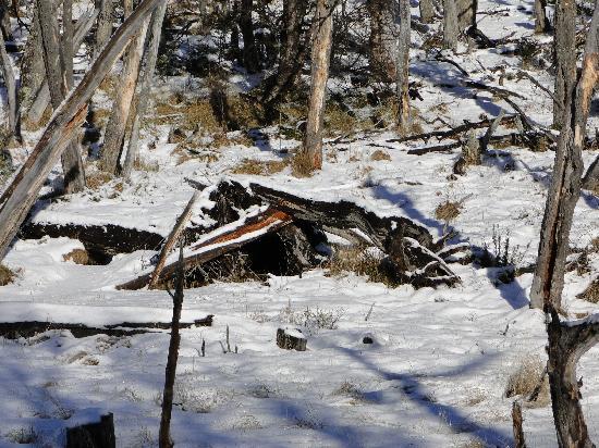 Parque Nacional Tierra del Fuego: La castorera