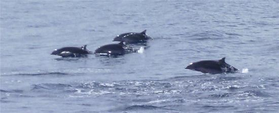Hackshaw's Boat Charters: More dolphins