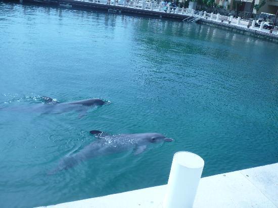 Catalonia Riviera Maya: Dolphins next door