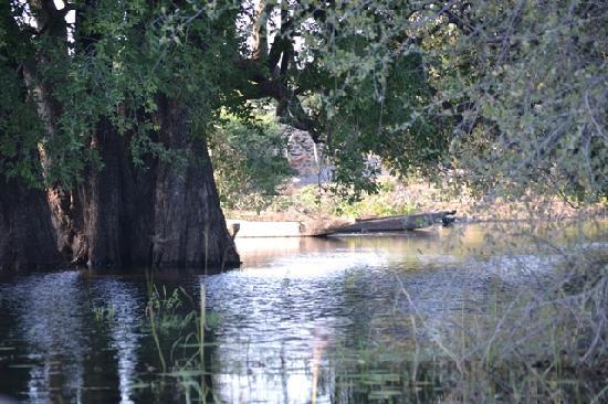Impalila Island: Mokoro - made from a tree trunk