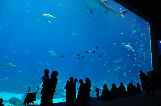Georgia Aquarium: Big Tank 2