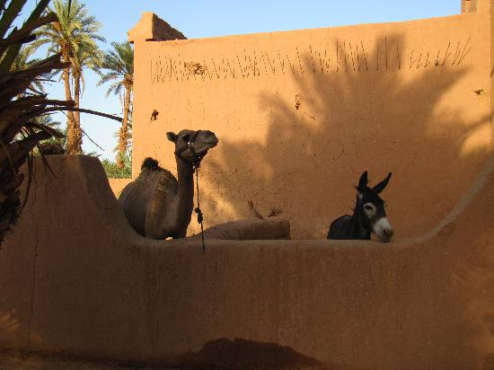 Chez le Pacha: Our friends overlooking the pool