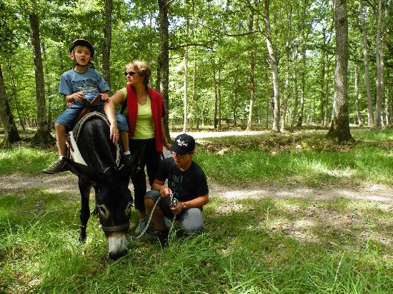 Le Monde d'Ossyane: Balade en forêt