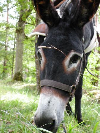 Les ânes de Madame: Notre compagnon de route