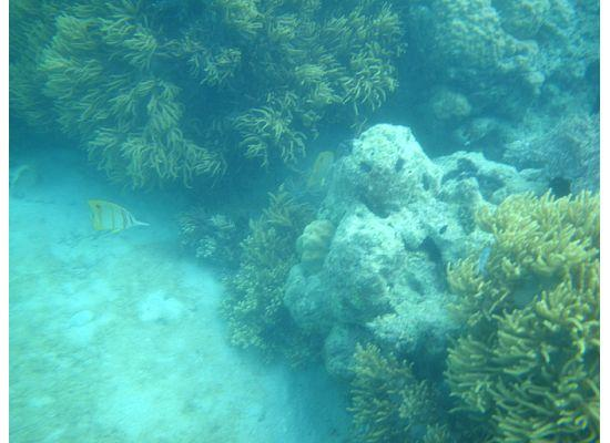 Lizard Island Resort: Beaked Coral Fish