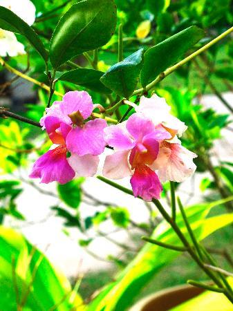 Muri Beach Hideaway: Orchids in the garden