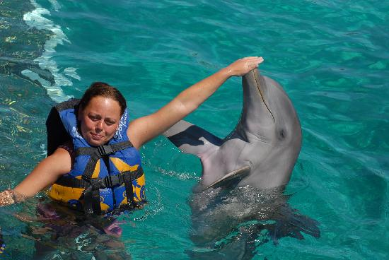 Occidental Costa Cancun: dophins great