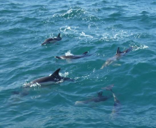 Dolphin Adventure: My new friends