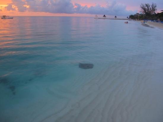Sandals Montego Bay: One of the many beautiful sunsets-and check out the stingray so close to the dock!
