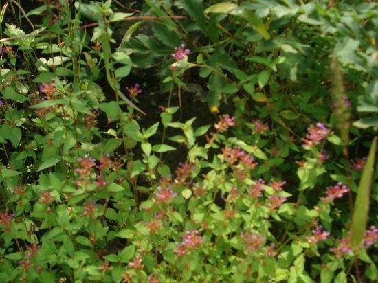 Bosque de Tlalpan Septiembre 2011 por Ricardo Uribe
