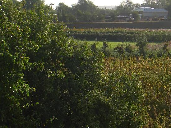 The Wild Iris Inn: View of flower farm to the east