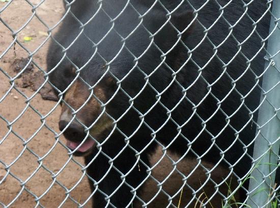 Oswald's Bear Ranch: close encounter