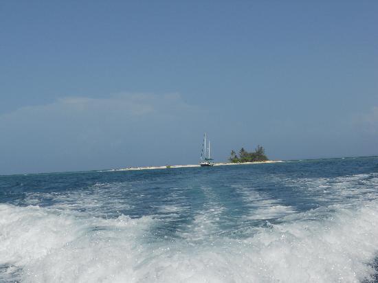 Serenity Sea Tours: Heading back to the Marina