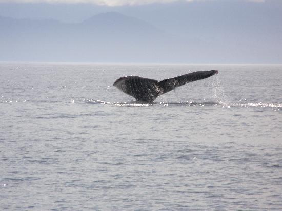 BC Whale Tours: Close up and personal!
