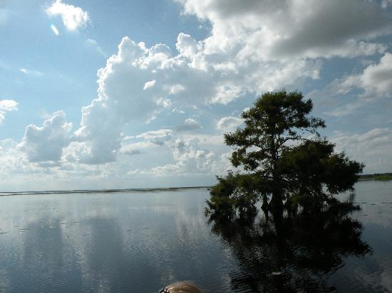 Wild Willy's Airboat Tours: Cypress in water