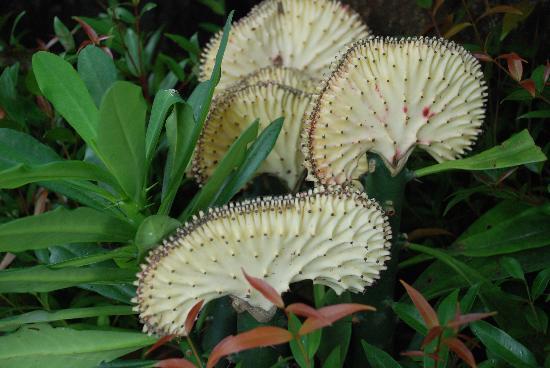 วัดพระธาตุดอยสุเทพ: Lovely exotic flowers are abundant.