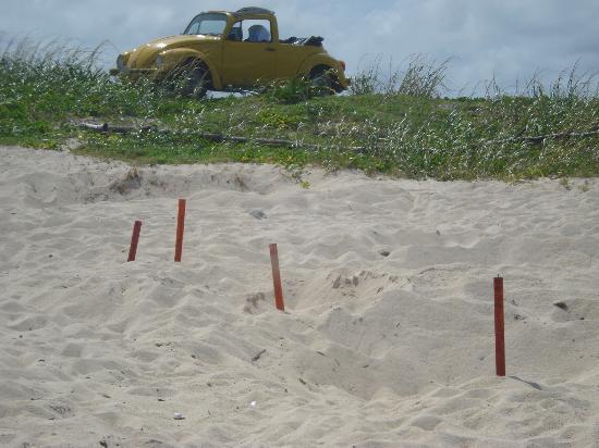 Cozumel (เกาะโกซูเมล), เม็กซิโก: Sobre las costas del Golfo algunas Playas con arena