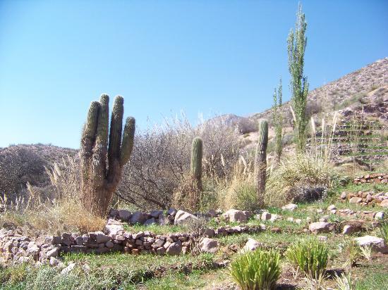 Cerro Chico: Vegetacion del lugar