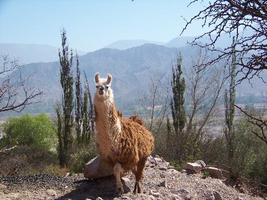 Cerro Chico: Llama