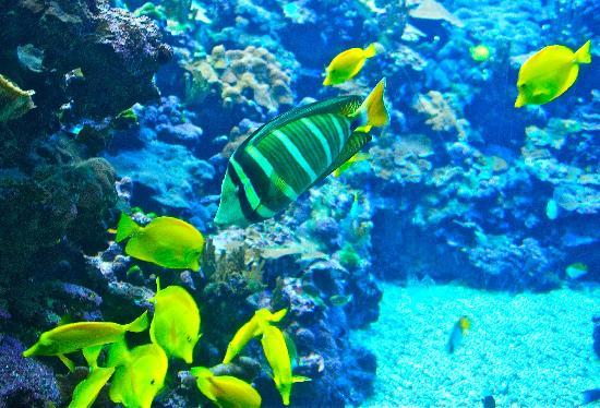 Maui Ocean Center: pretty fish