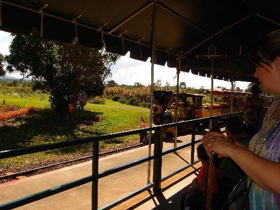 Dole Plantation: 汽車が走ってます