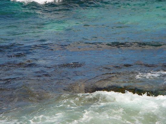 Laniakea Beach: この中に亀が・・・いたはず