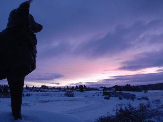 Parkbrae Estate: Sheepdog at sunset