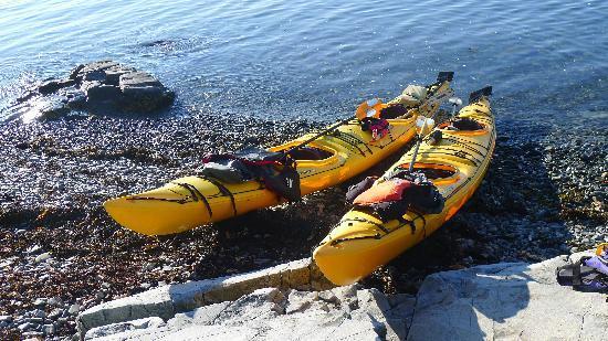 Acadia Park Kayak Tours: Kayaks.