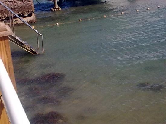 Le Meridien Dahab Resort: acqua mare torbida
