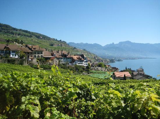 SwissSafari GmbH: Vineyards