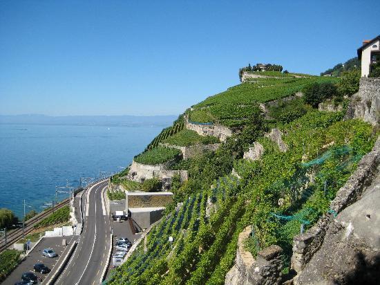 SwissSafari GmbH: Terraced Vineyards