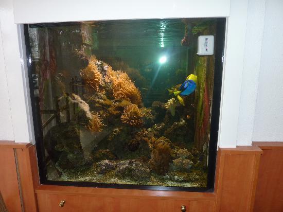 Hotel Multatuli: loved the fishtank in the reception