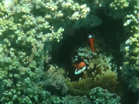 Kabira Bay: ファインディングニモ?