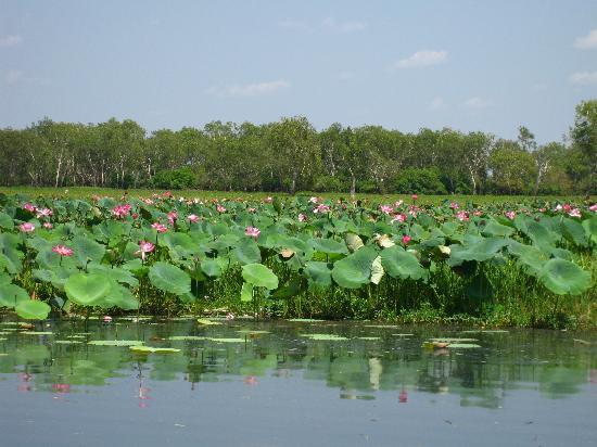 Yellow Water Cruises: Lily