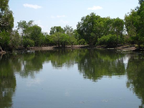 Yellow Water Cruises: Swamps