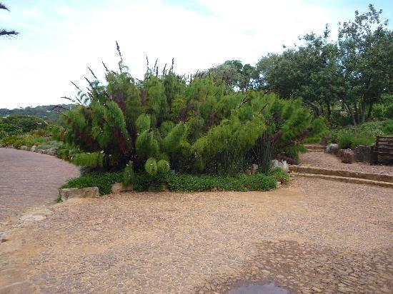 Kirstenbosch National Botanical Garden: Pflanzen im Park
