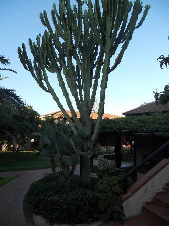 Baia del Sole Resort: Prachtige tuin