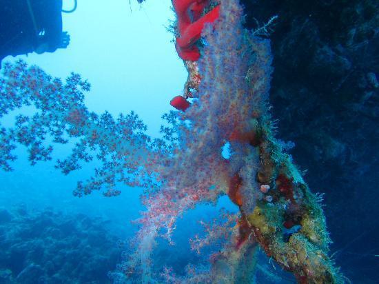 Scuba Hurghada Diving Center: El Minja