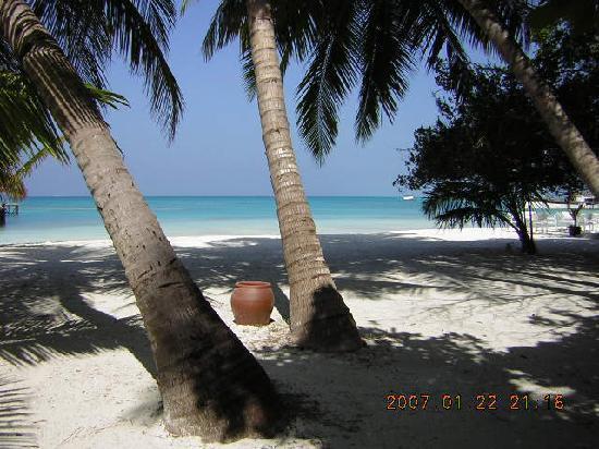 มีรูไอซ์แลนด์รีสอร์ท&สปา: 1st photo of meeru island