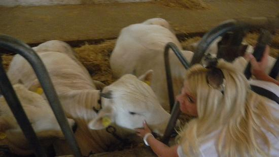 Walkabout Florence Tours: Me and the white cows at the farm