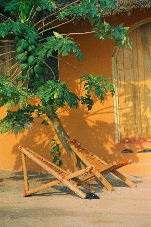 Kokrobite, Gana: Relax under the papaya tree