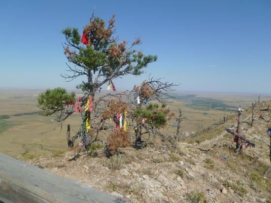 Bear Butte State Park: tree with native american offerings