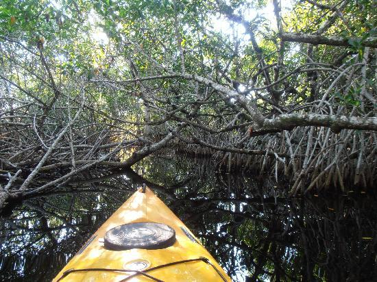 Everglades Rentals & Eco Adventures: In the thick ot it...