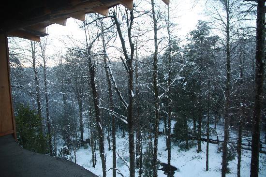 Huilo Huilo Nothofagus Hotel: Vista desde la habitación