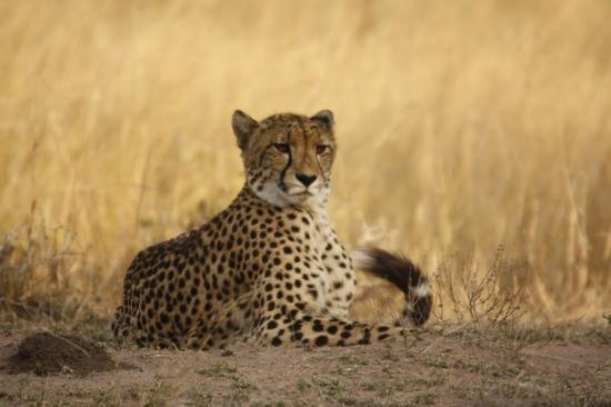 andBeyond Phinda Vlei Lodge: just one of the wonderful animals encountered on the game drive
