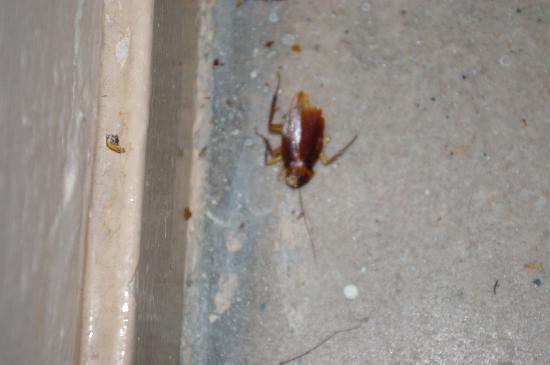 โรงแรมเดย์บรอดเวย์: Cafard dans les escaliers pdt 4 jours