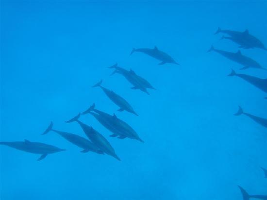 Gorgonia Beach Resort: Dauphins